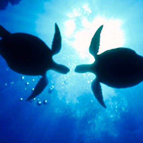 ウミガメの画像 p1_18